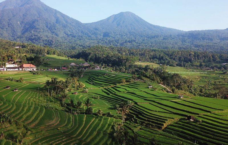 Jatiluwih Rice Terrace Bali Travel Planner